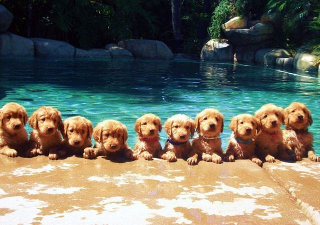 These puppies would genuinely ask about your day.#Funny#Cute#Puppy