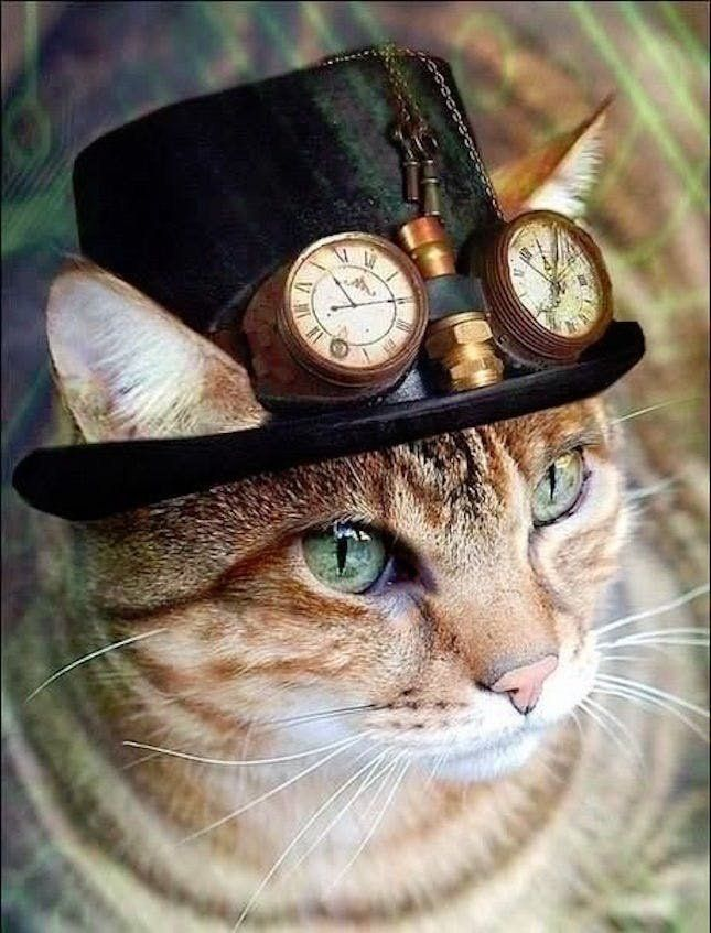 50 Cat Halloween Costumes That Are Purr-fect : steampunk cat costume  - Germanpascual.Com