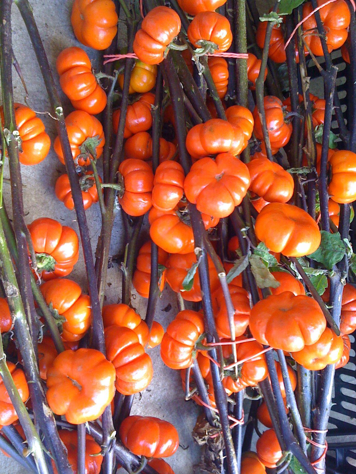 @ MCA Farmer's Market