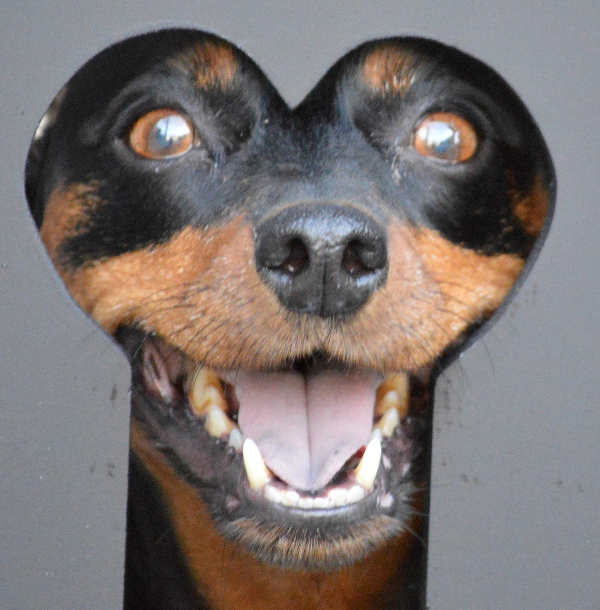I Seeee You Rottweiler Love Mini Pinscher Dogs