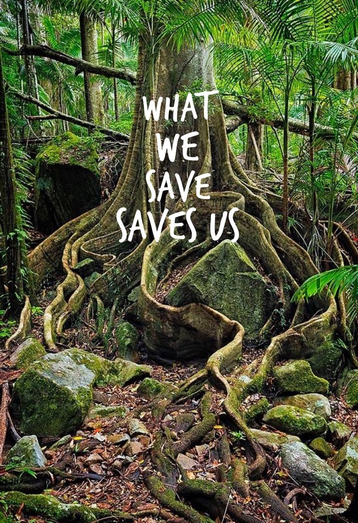 What We Save Saves Us Wild Woman Sisterhoodॐ
