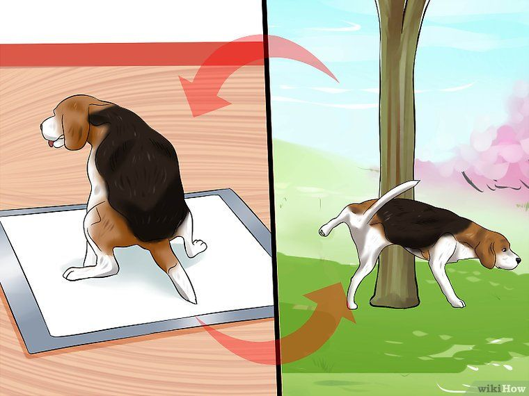 Use Puppy Pads and Outdoor Potty Training Together Potty