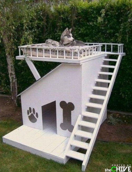 Dog house with rooftop deck...or cat house!