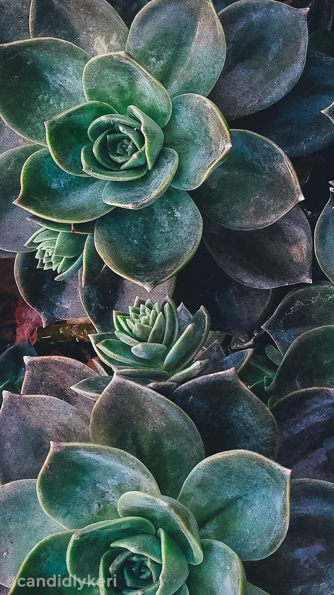 december28m | Wallpapers in 2019 | Succulents wallpaper, Mobile wallpaper, Fantastic wallpapers