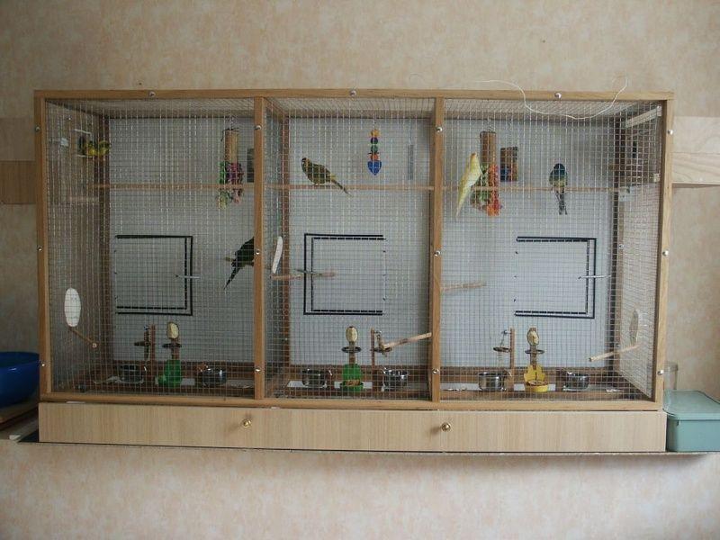 Ma volière d\'intérieur | Bird cages - madár kalitka/volier | Pinterest