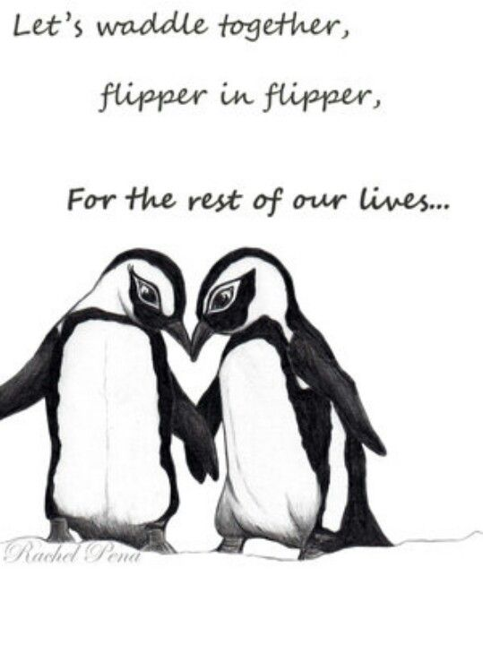Penguin Love Quotes Enchanting Penguin Love Where's My Penguin  Penguin Love  Pinterest
