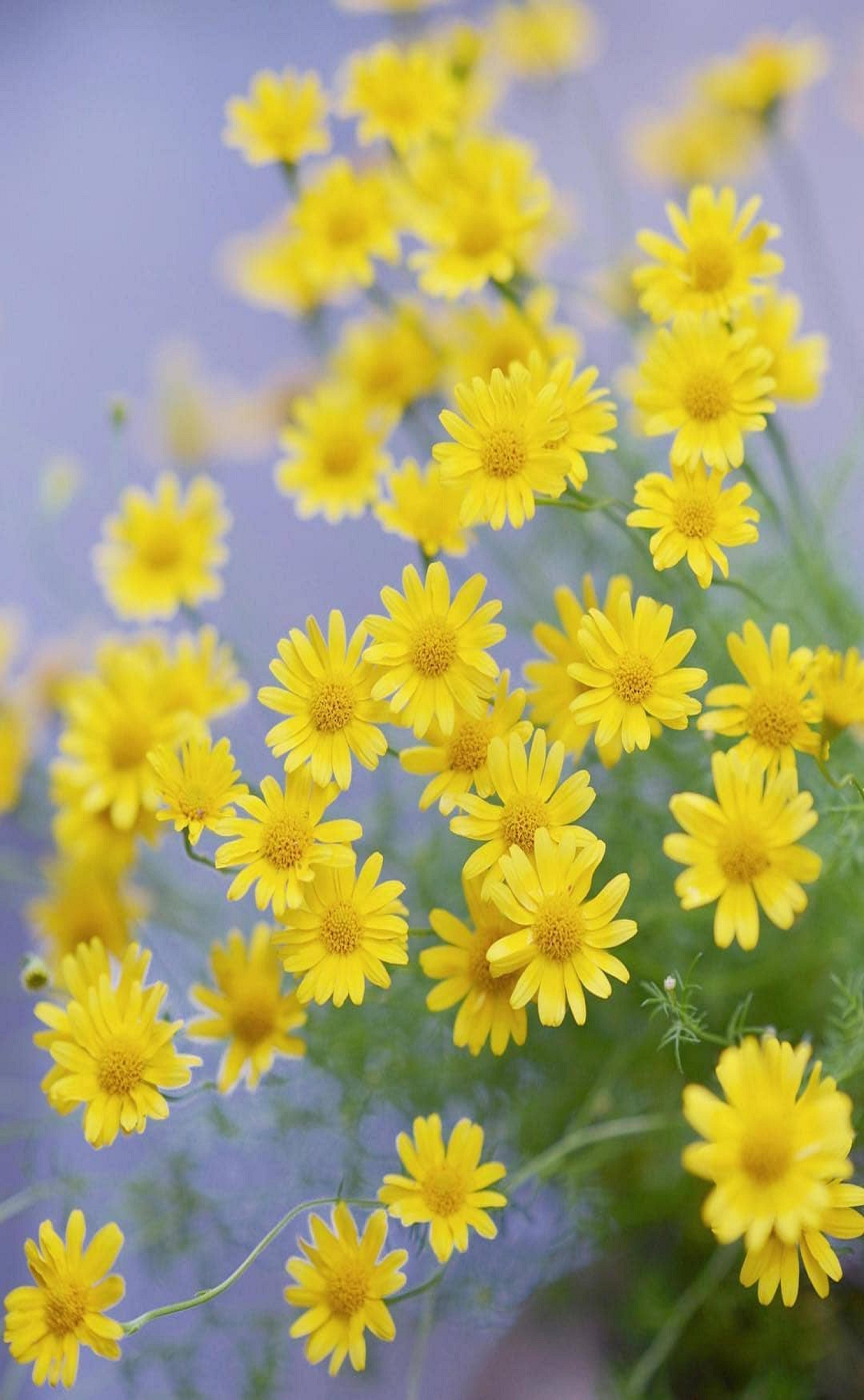 Fiori Gialli Da Giardino.Pin Di Arianna Sinatti Su Colore Di Sole Fiori Gialli Fiori E