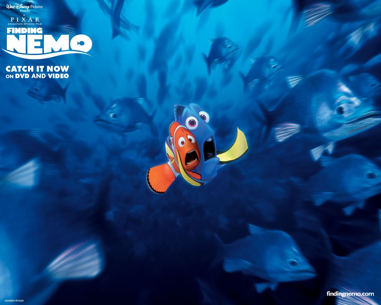 Dory Quotes Finding Dory  Google Search  Pixar  Pinterest  Dory And