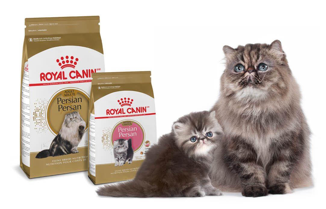 Medium puppy dry dog food royal canin size health