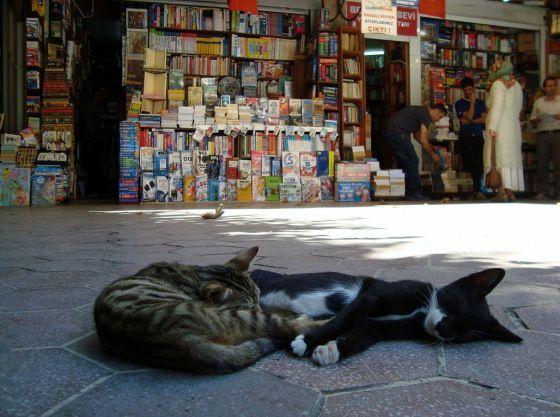 Image result for sahaflar çarşısı kedi