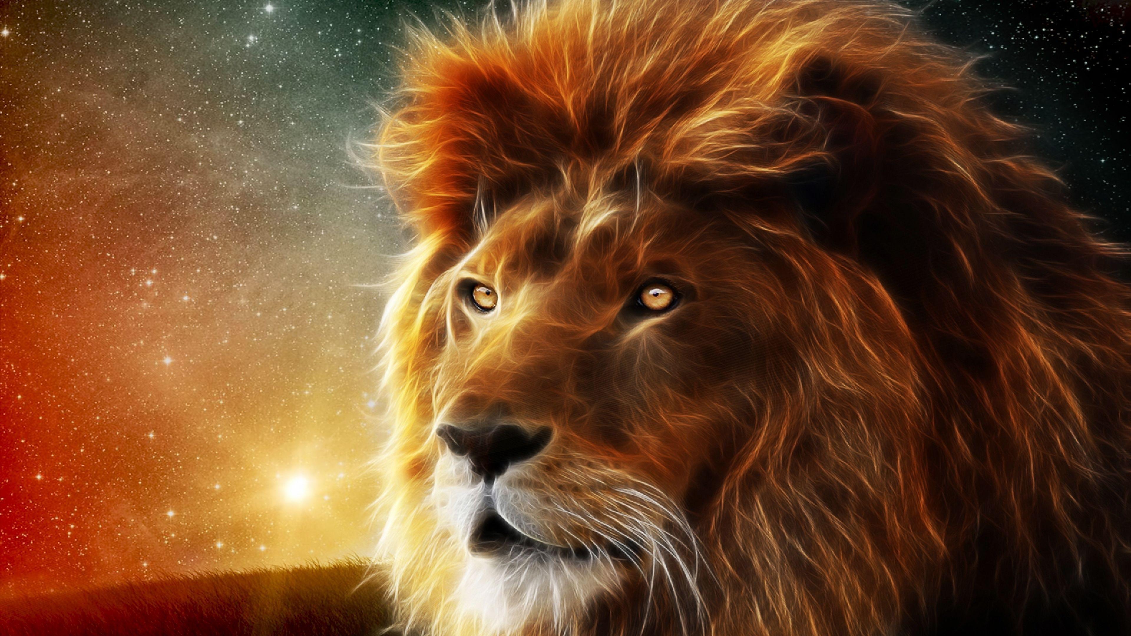 Lion Wallpapers Wallpaper Lion Hd Wallpaper Spirit Animal Lion Wallpaper