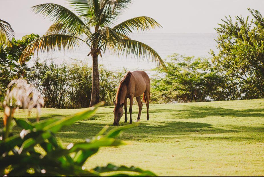 W Retreat & Spa Vieques Island Puerto Rico Weddings.