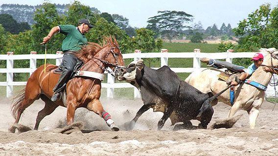 Abaixo-assinado · Governo da Bahia: vete o projeto que regulamenta a vaquejada como prática esportiva! · Change.org