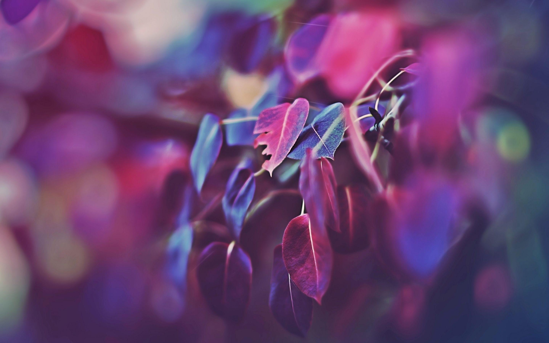 Ipad Air Or Ipad Mini Retina Hd Wallpaper: Purple Leaves Retina MacBook Pro Wallpapers
