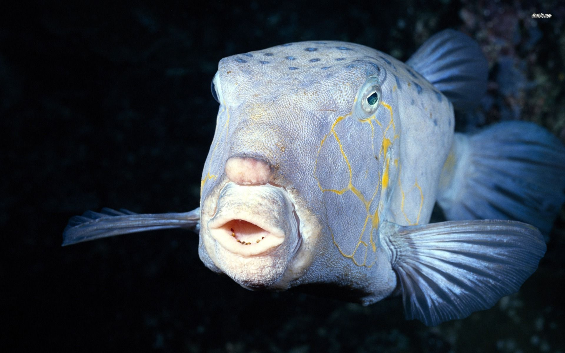 deep sea fish dive and ocean pinterest deep sea