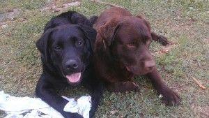 Secondo cane: come, quando, perché - Livingcesenatico (Blog) - http://bit.ly/1KbMsoo - Pet Community and Social Network