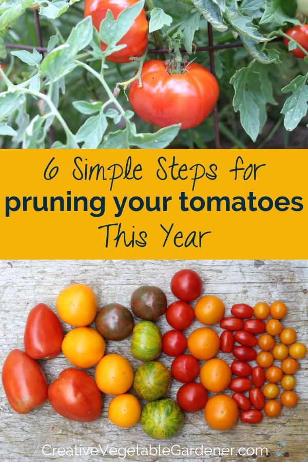 e21664f046e9058ba665a0da925a8b8d - Expert Gardener Organics Vegetable & Tomato Food