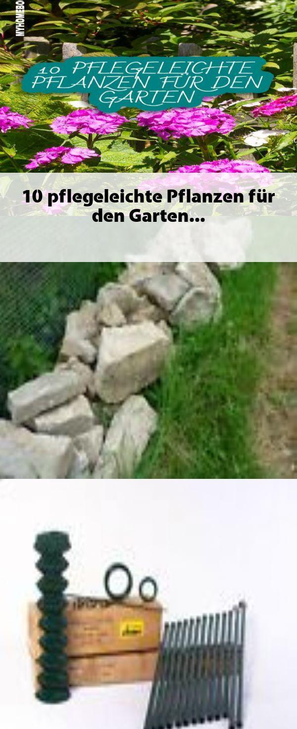 10 pflegeleichte Pflanzen für den Garten #pflegeleichtepflanzen