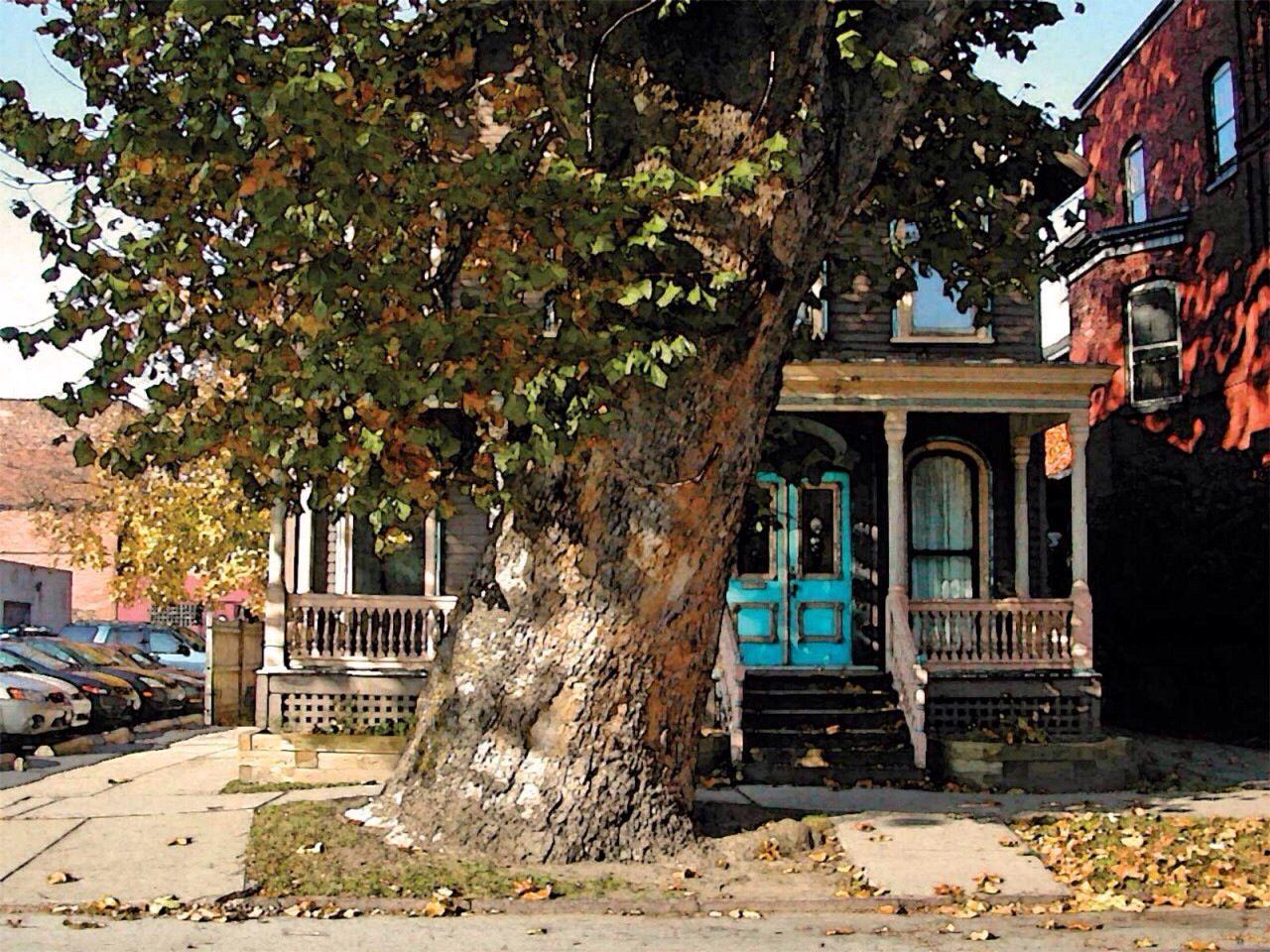 Oldest tree in Buffalo NY | BUFFALO NEW YORK and suburbs | Pinterest