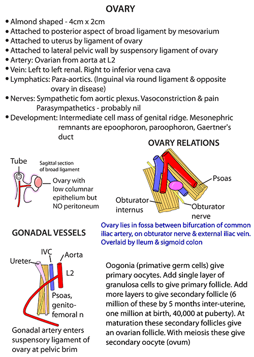 Instant Anatomy Abdomen Vessels Arteries Ovary Vm