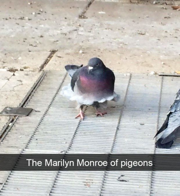 Photo of If These Animal Snapchats Will Not Make You Laugh, Nothing Will