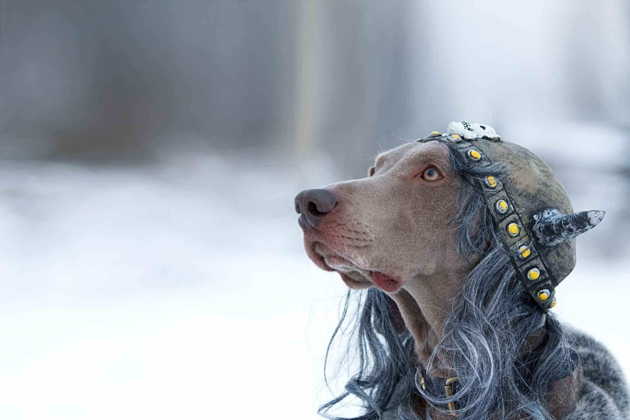 Norse Mythology Dog Names Wag! Dog names, Dogs, Norse