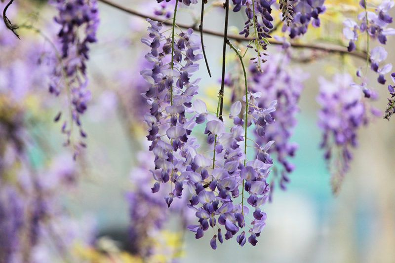 37 Common Plants That Are Poisonous To Dogs Types Of Purple Flowers Types Of Flowers Plants