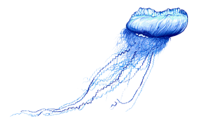 Blue Bottle Jellyfish Png Free Png Images Background Blue Bottle Download Free Images Jellyfish Png Jellyfish Illustration Blue Bottle Pet Jellyfish