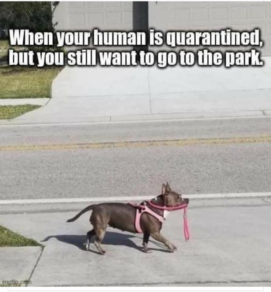 Self Walking Dog Walks The Dog In 2020 Funny Dog Memes Dog Walking Dogs