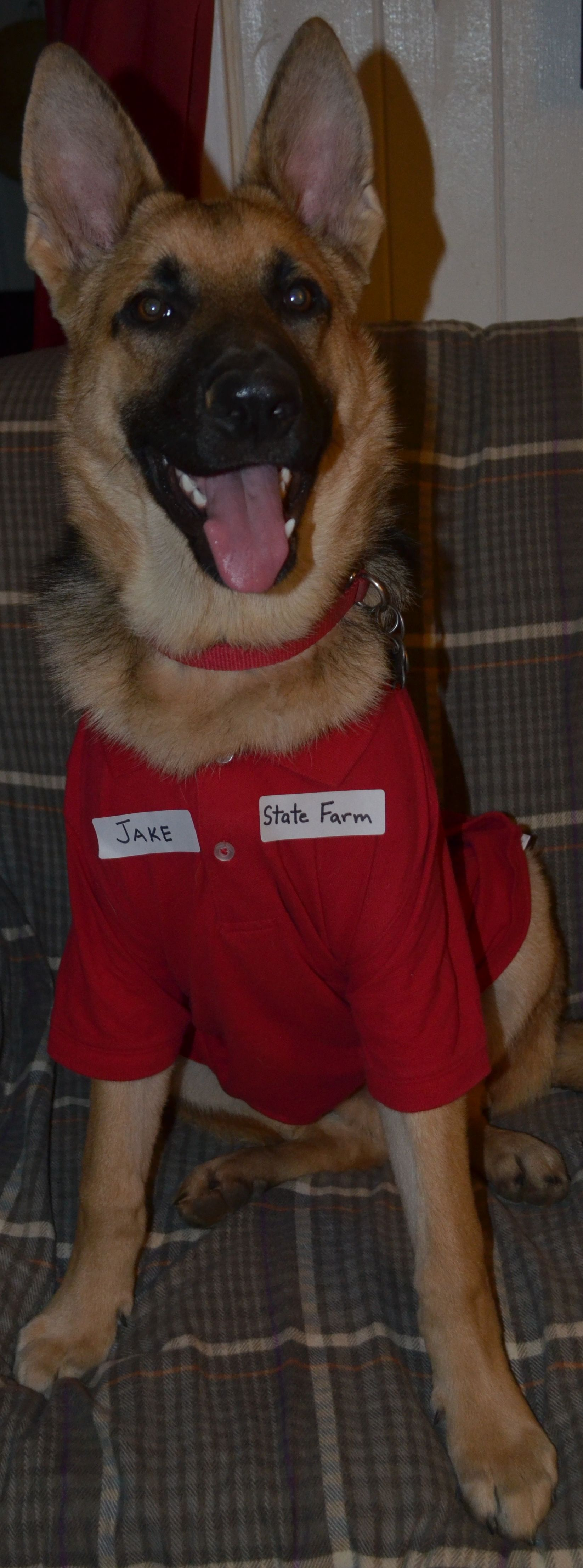 Jake From State Farm Ready For Halloween Jake From State Farm Farm Dogs Dog Costume