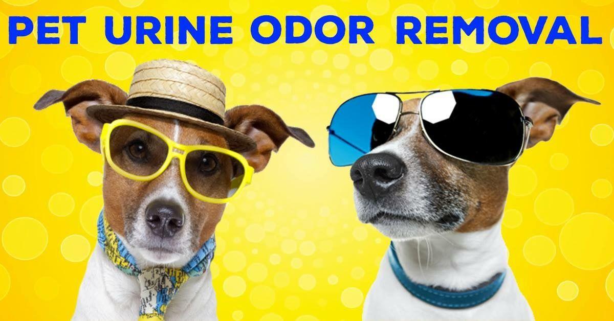 Pet Urine Odor Removal Pet urine, Dogs and kids, Pet