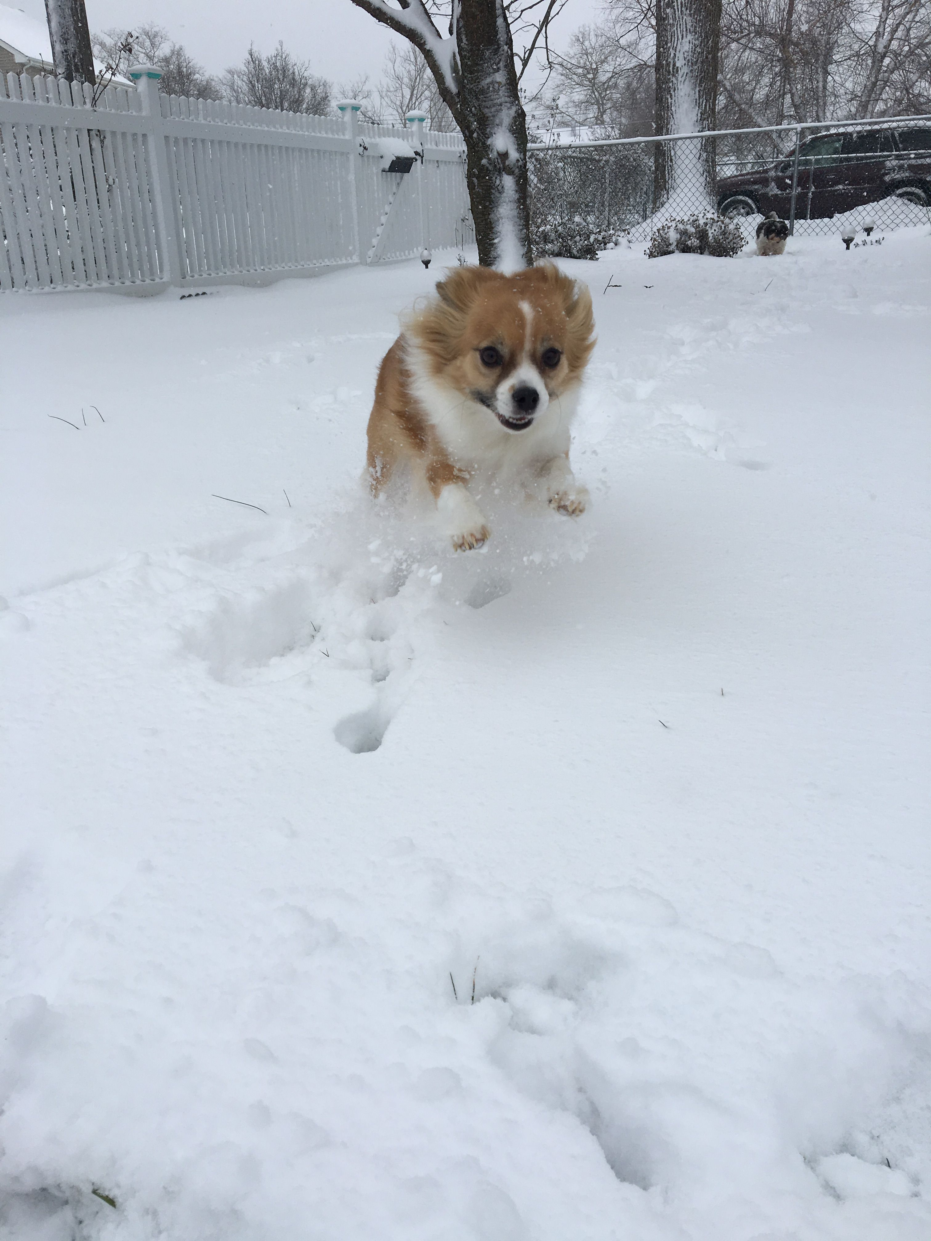 It's FRIDAY and Pepper is ready for the weekend! Snow won