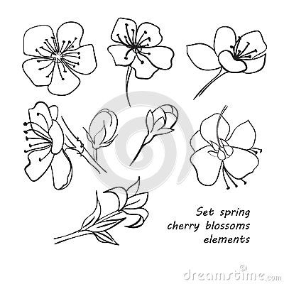 set of spring cherry blossom flowers hand drawing