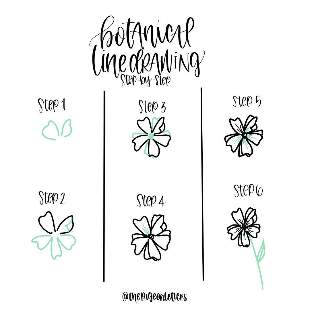 Botanical Flower Line Drawing : Botanical line drawing aka how to draw pretty plants