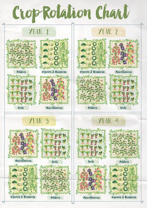 Crop rotation chart anna langbein blog also vegetables pinterest rh