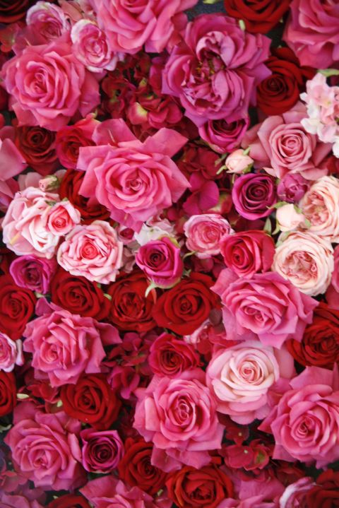 The meaning of every rose color pinterest rose color meanings find out all the different rose color meanings just in time for valentines day mightylinksfo