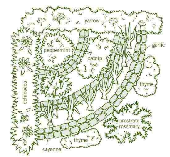Medicinal Herb Garden Cold and Flu is part of Herb garden design, Medicinal herbs garden, Herb garden, Garden layout, Medicinal herbs, Garden planning - Alleviate cold and flu symptoms without the need for pharmaceuticals by growing this organic medicinal herb garden