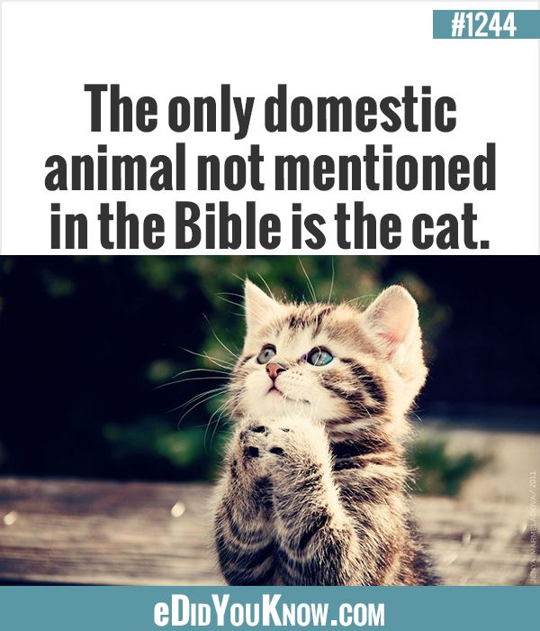eDidYouKnow.com ►  The only domestic animal not mentioned in the Bible is the cat.