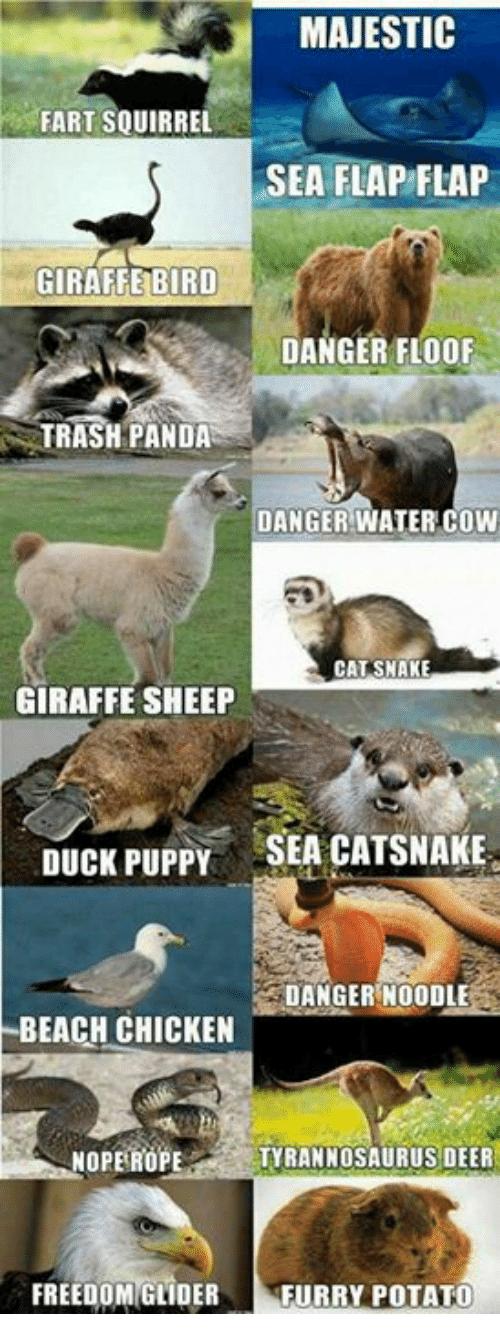 via me.me Animal jokes, Funny animal memes, Funny animals