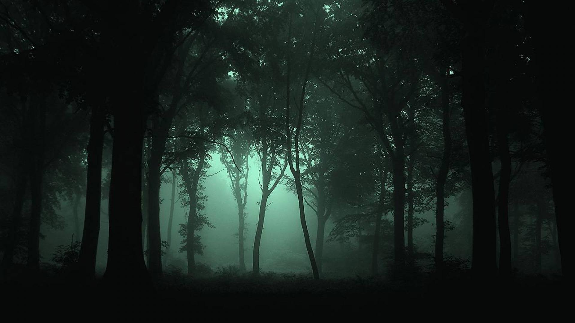 High Resolution Dark Forest Wallpaper Hd