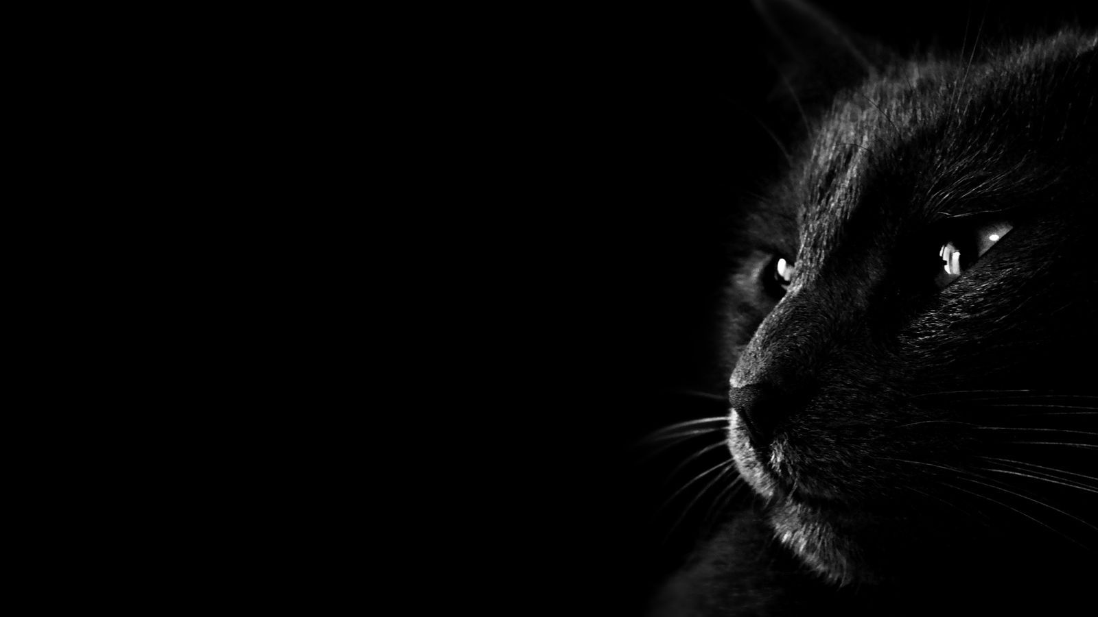 Cat Dark Wallpaper Black Cat Images Cat Wallpaper Cat Dark