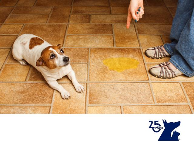 CLÍNICA VETERINARIA DEL BOSQUE. Adiestrar a un perro para que orine o defeque en un lugar adecuado no es muy difícil, solo se requiere de paciencia. Los cachorros, por su edad, no controlan del todo sus esfínteres, pero mientras van creciendo es importante tener un horario de salida para que tu mascota se acostumbre a orinar y a defecar en ese tiempo y afuera. Recuerda siempre recoger las heces fecales, pues todos las respiramos. En Clínica Veterinaria del Bosque te ayudamos…