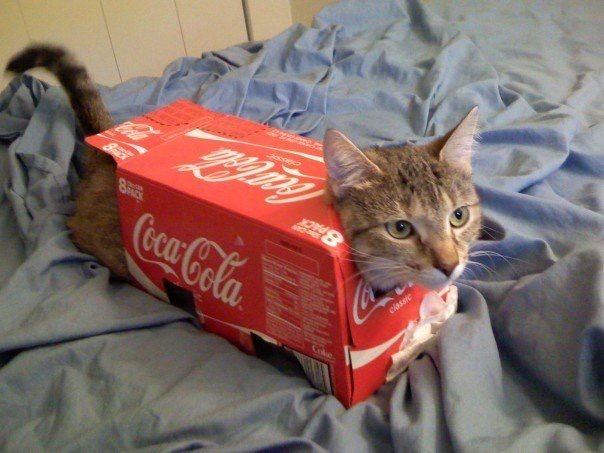 share a coke with your cat