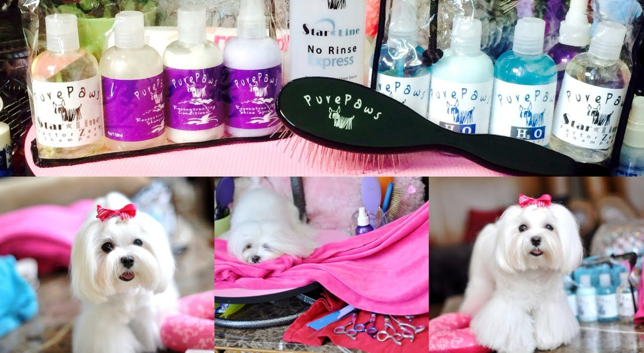 Dolce MORNING Routine-July New GT Grooming Goodies - Dolce Flip, Tear St...