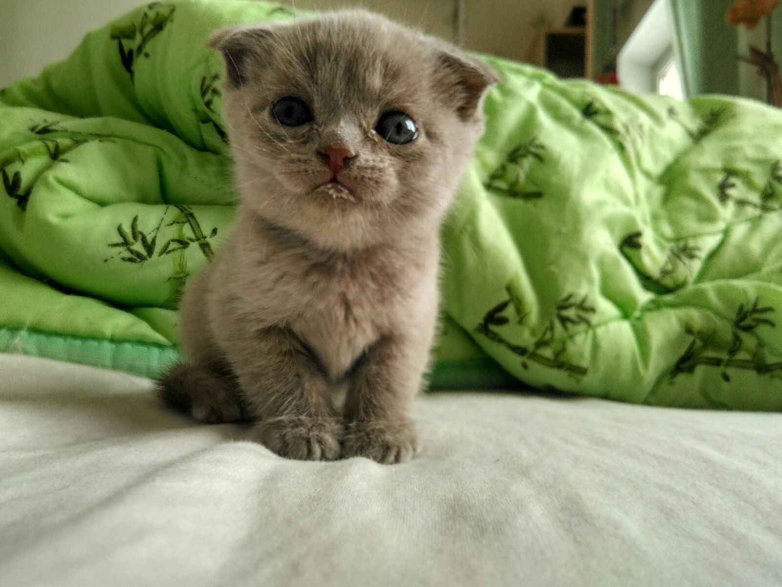 Pin On Kitty Lovers