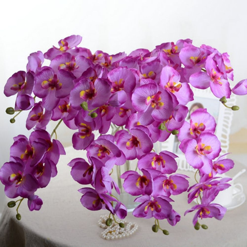 Buy an orchid