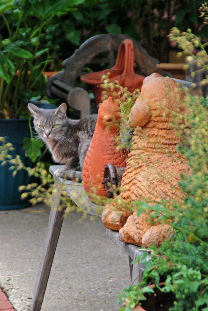Plants that are Poisonous to Cats Plants, Tuberous