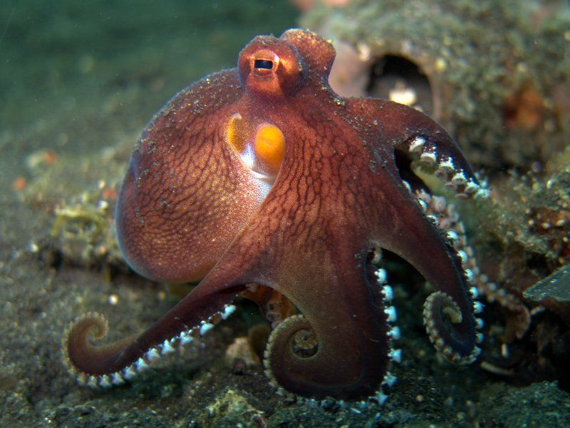 32 Amazingly Beautiful Red Animals You Need To See Mollusc