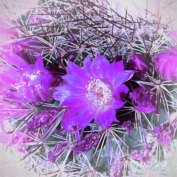 Small cactus with pink flowers growing in phoenix az arizona small cactus with pink flowers growing in phoenix az arizona southwest cactus flowers desert mightylinksfo