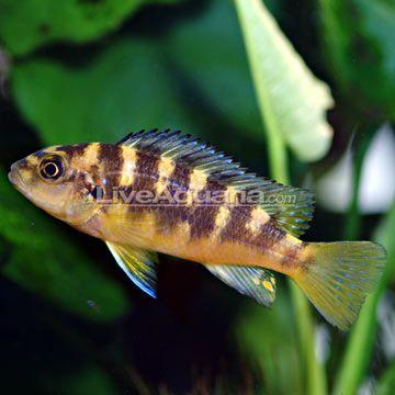 fresh fish online dating